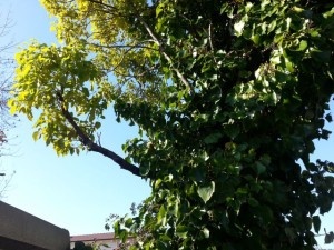living branch